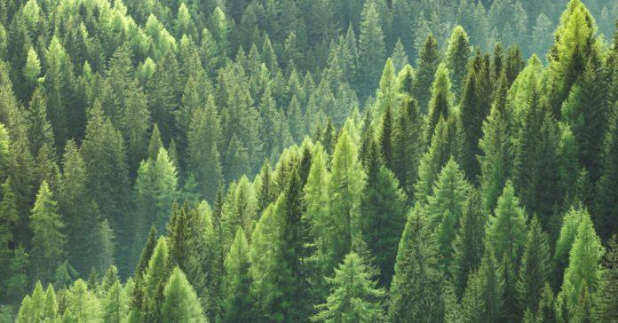 Село на Львівщині вирішило заборонити будь-яке вирубування лісу